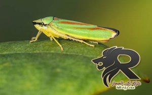 شركة مكافحة حشرات بالرياض ركن الحجاز